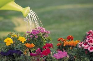 Държавна енергийна фирма давала 2 млн. лв. за поливане на цветя