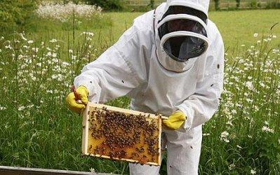 Пчеларите с по 5 млн. лв. годишни помощи до 2020 г.