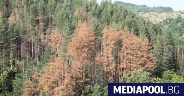 Един от приоритетите на държавните горски предприятия през 2018 г.