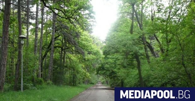 Започна премахването на опасните дървета около алеите в част от