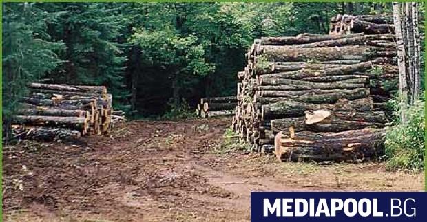 Никакъв ефект върху незаконния добив на дървесина не са постигнали