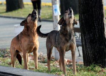 Бездомните кучета в София продължават да намаляват, котките стават повече