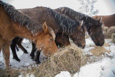 Прокуратурата разследва инцидент с осем простреляни коня
