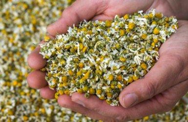 България е най-големият производител на билки в ЕС