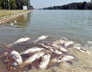 WWF: Всички реки в България са увредени