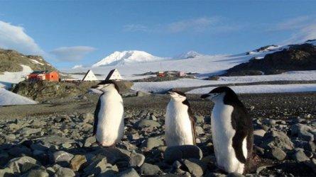 Пет нови за Антарктида останки от древни растения откри българската експедиция