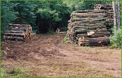 Е-търговете за дървесина се уеднаквяват и облекчават