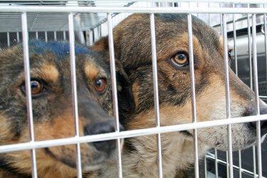 Столична община ще праща кучета за осиновяване в Германия
