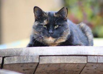 Австралия обяви война на безпризорните котки