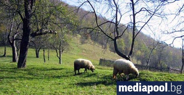 Земеделските стопани получиха над 450 млн. лева по т.нар. зелени