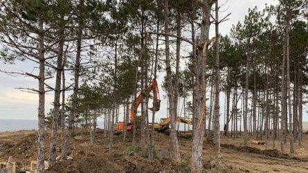 WWF и Интерпол започват проект срещу престъпленията в горите