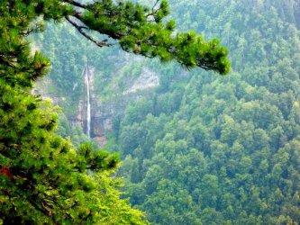 Държавата възстановява изкупуването на частни гори до 20 дка