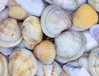 Забранява се риболовът на бели пясъчни миди в Черно море