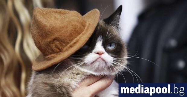 Котката Гръмпи (Сърдитата котка) известна в интернет заради своето кисело
