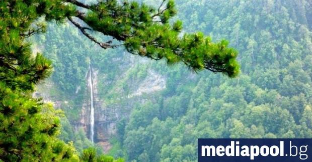 Държавните горски стопанства ще възстановят изкупуването на частни гори до