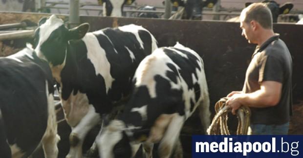 До 10 юни включително земеделските стопани могат да извършват промени