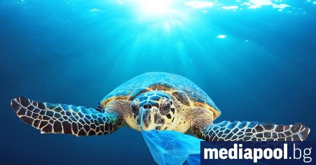 Около 17% от морските животни могат да изчезнат до 2100