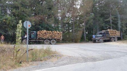Затяга се контролът върху превоза на дървесина