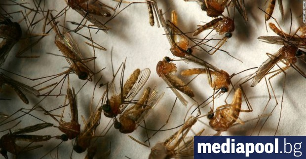 Властите в Хондурас обявиха епидемия от острото инфекциозно заболяване денга