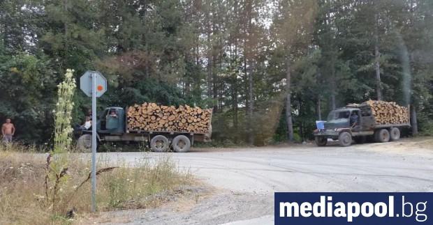 Подобряване на системата за контрол върху превоза на дървесината предвижда