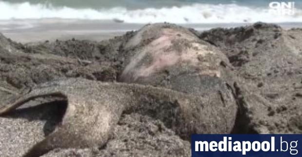 Екоминистерството обяви,че намаляват регистрираните случаи на изхвърлени мъртви делфини от