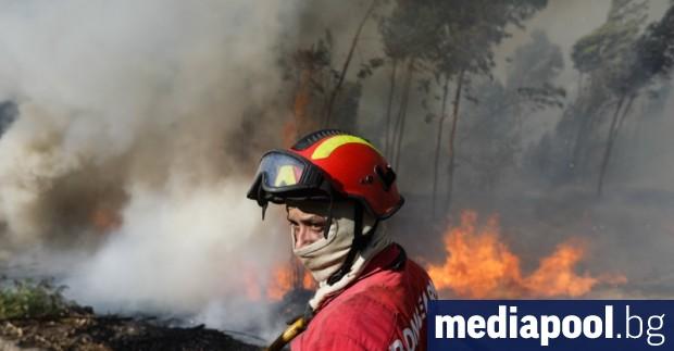 Хиляда пожарникари се борят с избухналите горски пожари в Централна