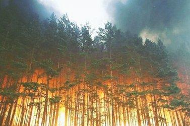 За възстановяване на изгорелите тази година в Сибир гори ще е нужно столетие