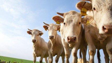 Крави и дрехи - как използването на земята се отразява на климата