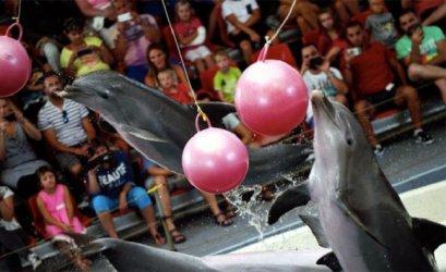 Протестиращи поискаха закриване на делфинариума във Варна