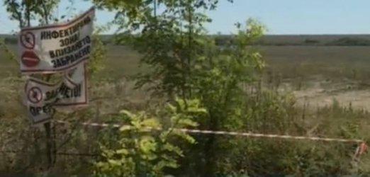 Русенски села се оплакват от смрад от загробените прасета