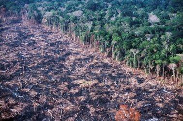 Бразилия отказа парите на Г-7 за борба с горските пожари в Амазония