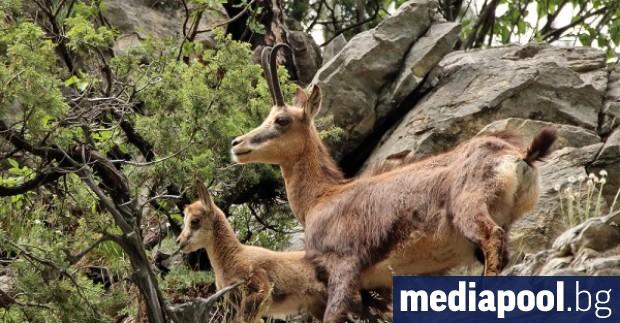 Природозащитната организация WWF алармира, че проектът за нов план за