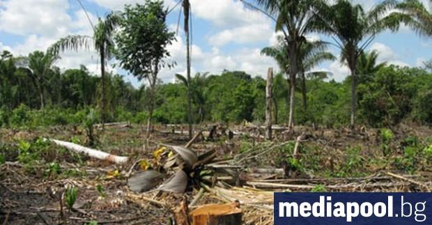 Снимка: В Амазония фермерът Аурелио Андраде сече гори, за да оцелее
