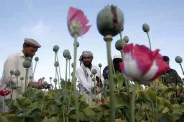 ООН: 30 цивилни са убити при американски удари срещу нарколаборатории в Афганистан