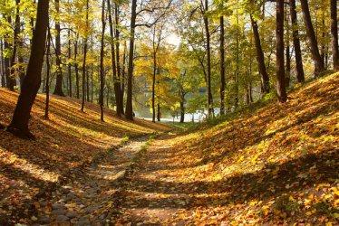 Държавата за втори път ще изкупува частни гори