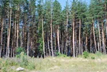 Държавата ще изкупи малки частни гори за 1 млн. лв.