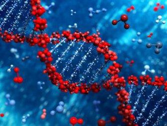 Руски учен също иска да създаде генномодифицирани деца