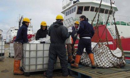 И Фолклендските острови се страхуват от последиците от Брекзит