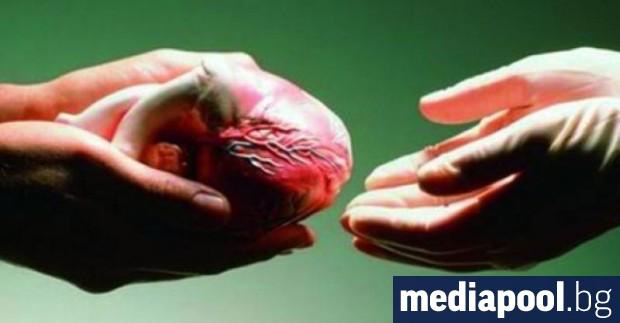 Даването на съгласие от близките на човек в мозъчна смърт