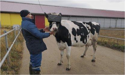 Виртуални пасища повишават млеконадоя на руски крави