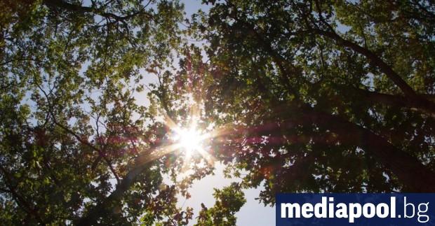 Снимка: Краят на сагата с горските заменки не се вижда