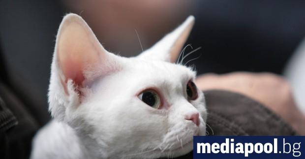 Две международни изложби на котки ще се проведат този уикенд