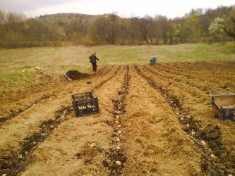 За втора поредна година НСИ отчете спад на селското стопанство