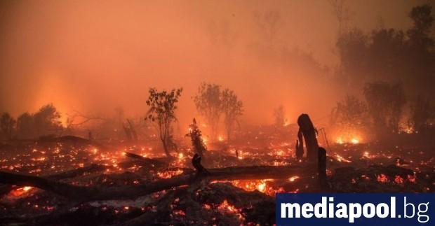 Двама австралийски пожарникари доброволци загинаха при опит да потушат горски