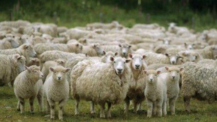 Вдигнати са субсидиите за фермерите с по-малко добитък