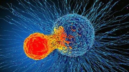 Имунно откритие дава надежди за терапия срещу всички видове рак