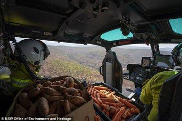 Храна от въздуха за пострадали от пожарите в Австралия животни
