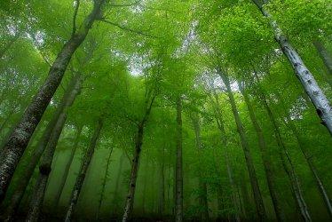 С над 50% повече собственици искат да продадат горите си на държавата