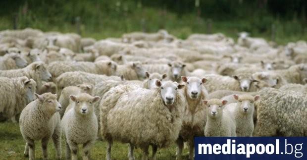 Снимка: Вдигнати са субсидиите за фермерите с по-малко добитък