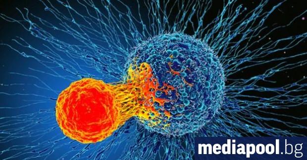 Ново откритие за имунната ни система може да бъде използвано